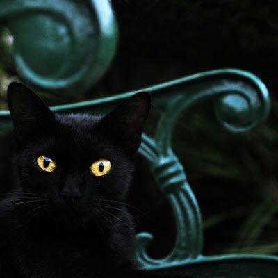 black cat green bench