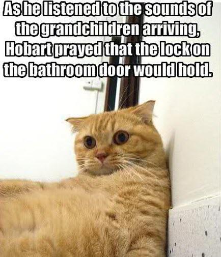 cat grandchildren