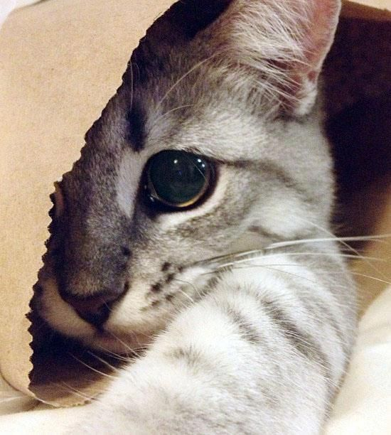cat in a bag