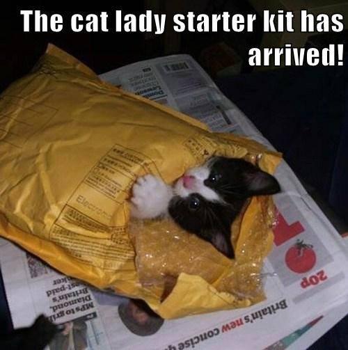 cat in mailer