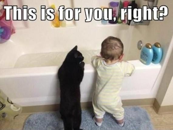 cat no bath