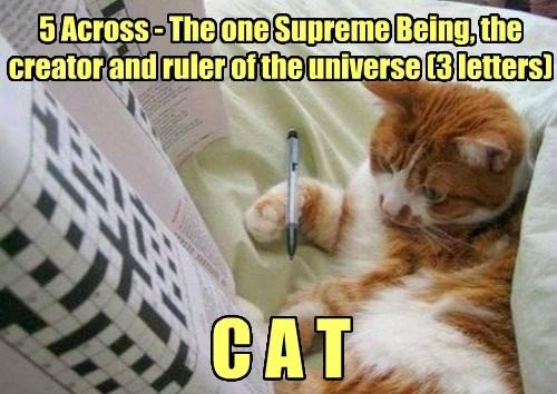 crossword cat