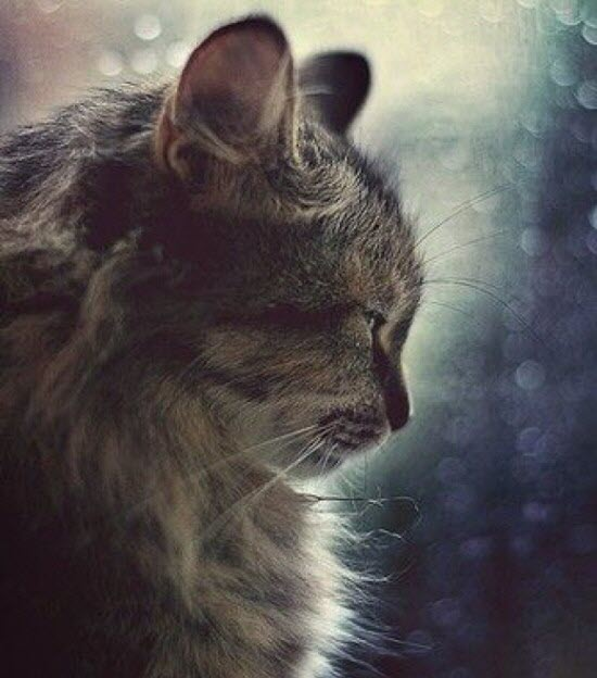 daydreaming cat sparkle