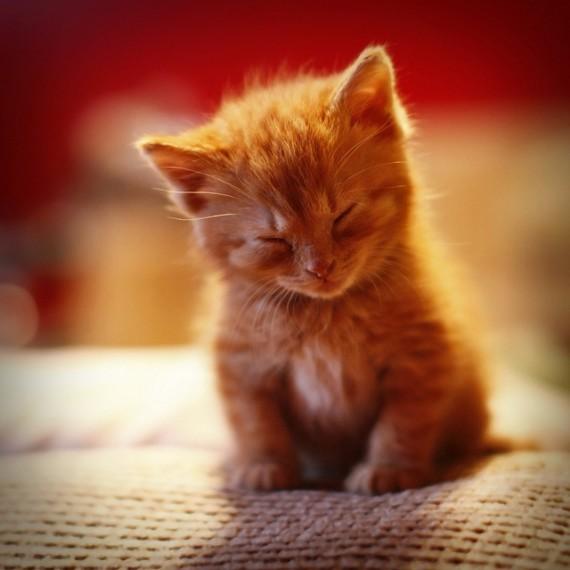 felling slepy kitty