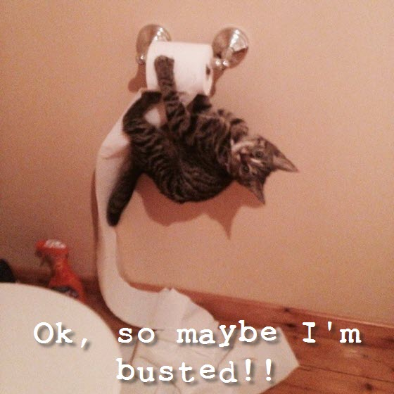 kitty caught toilet roll