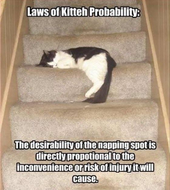 kitty laws