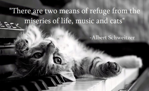 cat-and-piano