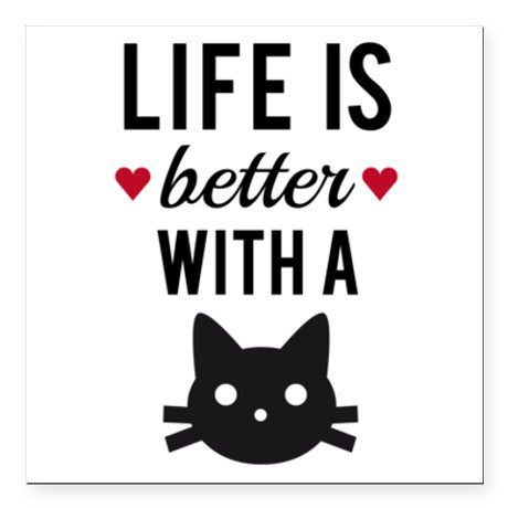 life better with a cat