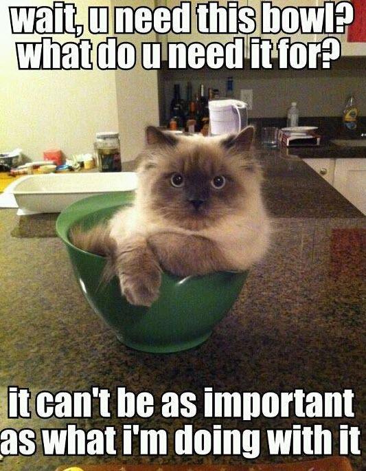 lol_cats_bowl