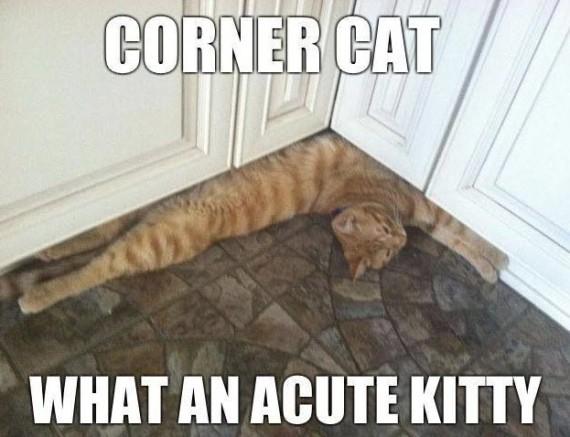 acute kitty