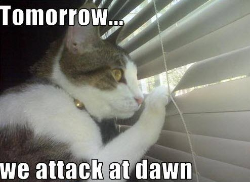 attack at dawn