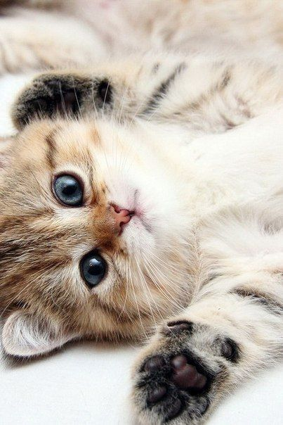 cute kitten 2