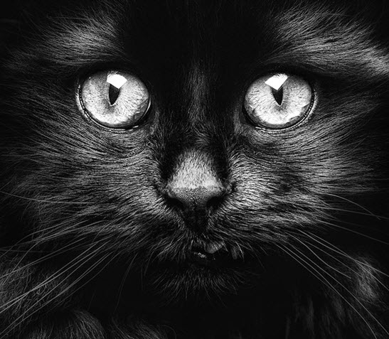 amazing black cat face