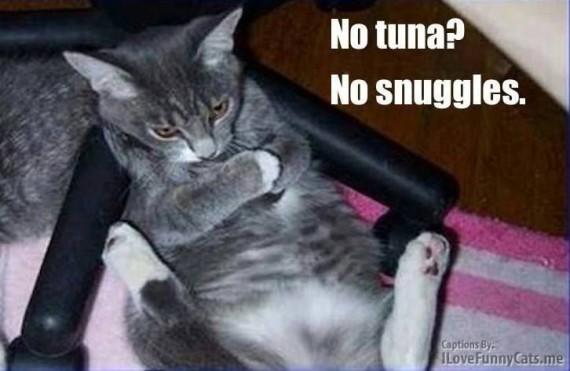 no tuna lol