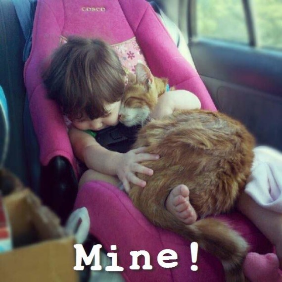 toddler and cat!
