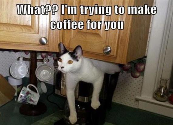 coffee cat lol