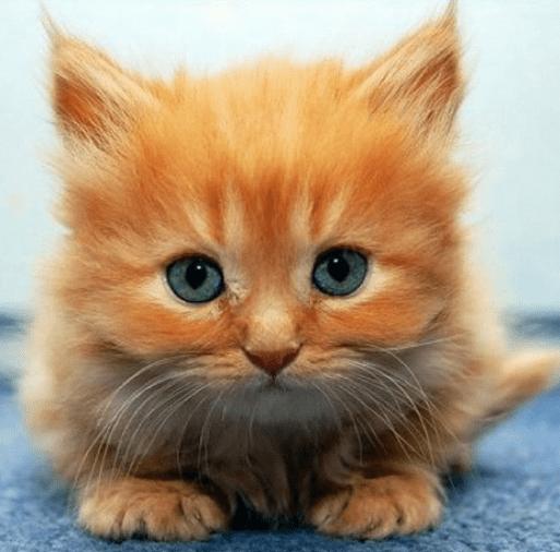 ginger kitten 2
