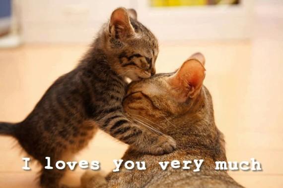 mum and kitten