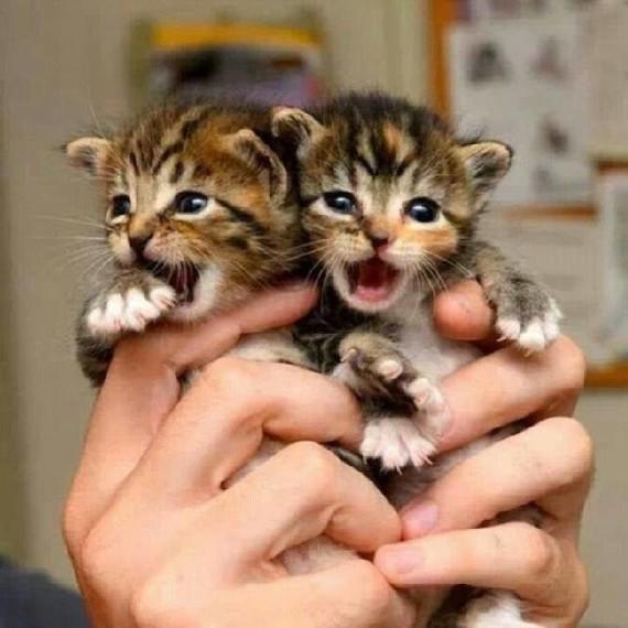 2 kitten in hand