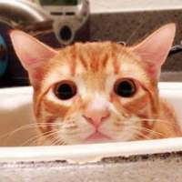 Have You Ever Wondered Why Your Cat Loves The Bathroom?