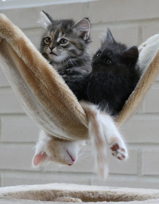 bigger hammock required