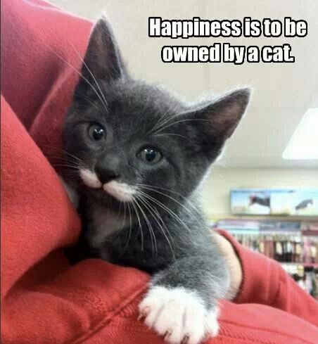happiness to be owned by a cat