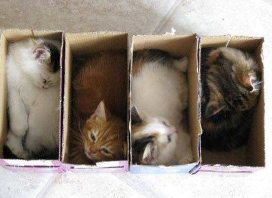 kitties in boxes