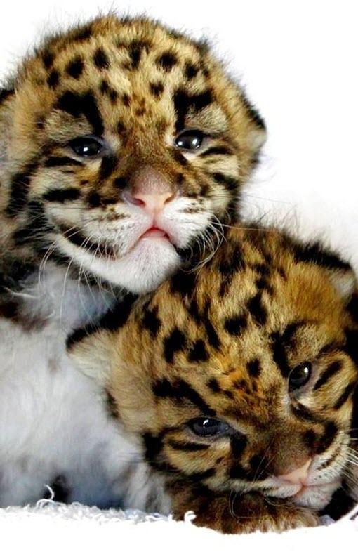 big cat cute 5