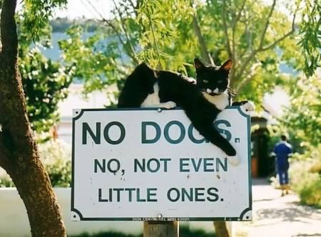 no dogs cat sign