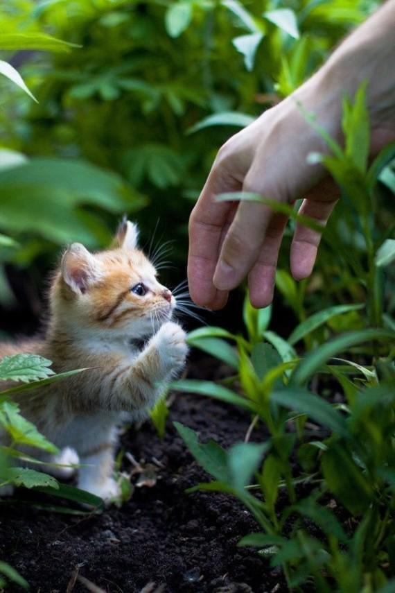 tiny kitten and hand