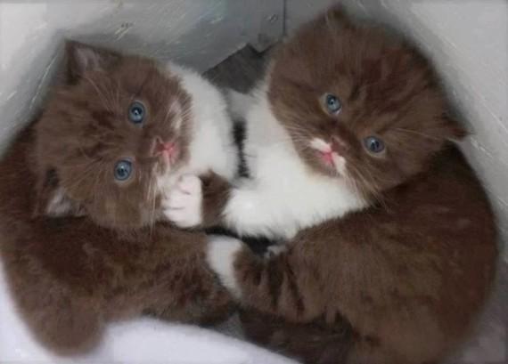 2 kitties in box