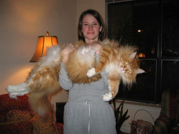 big kitty