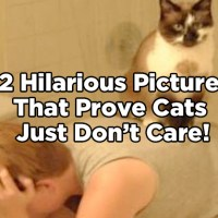 12 Hilarious Pictures That Prove Cats Just Don't Care!