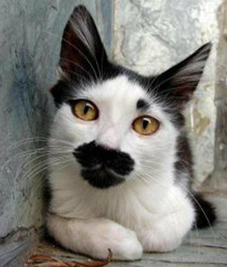 moustache 2