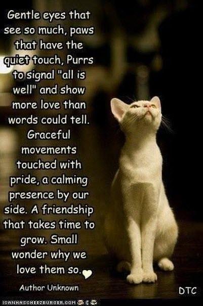 poem cat