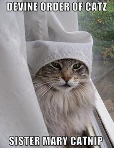 sister catnip lol