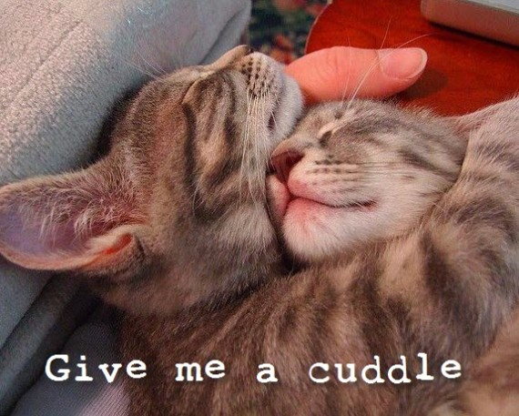 sleepy cuddling kitties