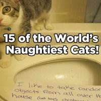 15 of the World's Naughtiest Cats!