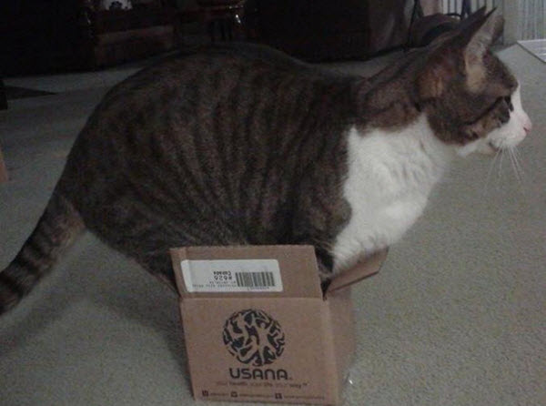 cat in small packaging box
