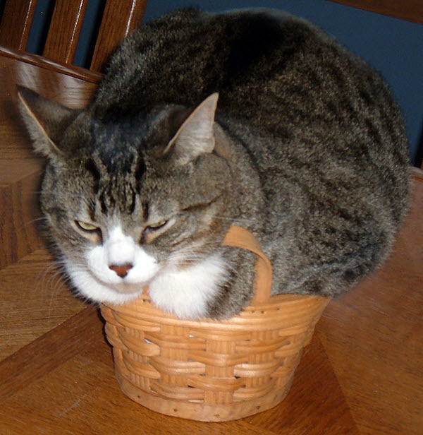 cat squashed in basket
