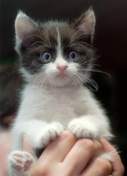 cutie in hand