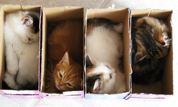 row of cats in boxes