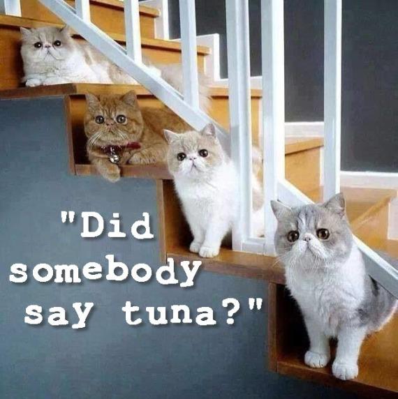 tuna stairs