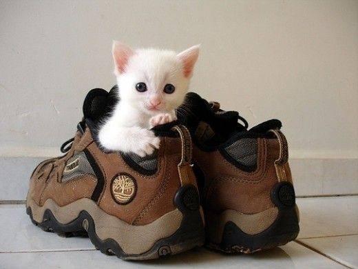 white kitten in trainer