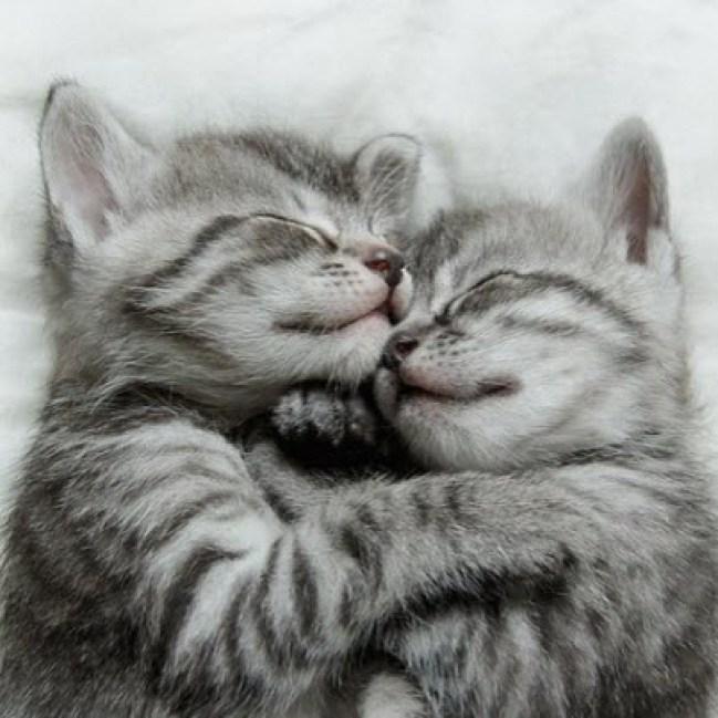 Cuddle 3