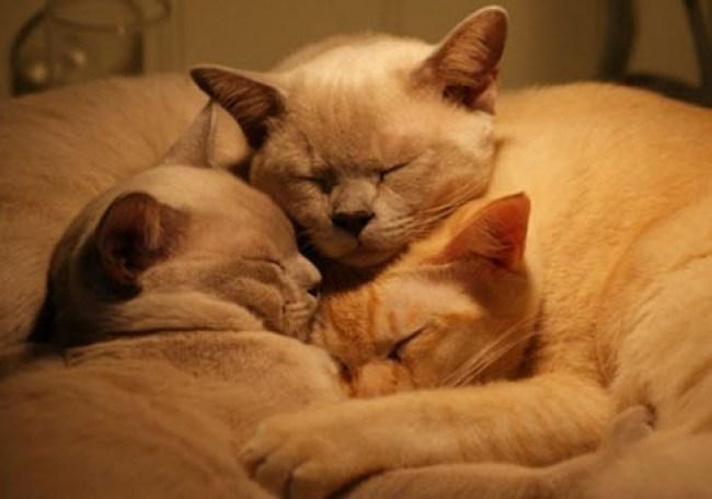 Cuddle 8