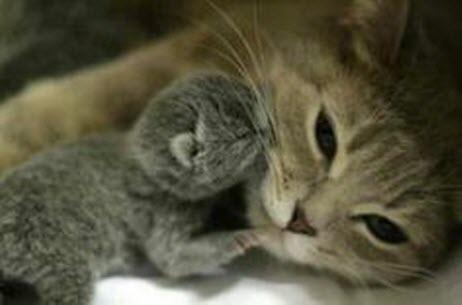 kitten kiss mama