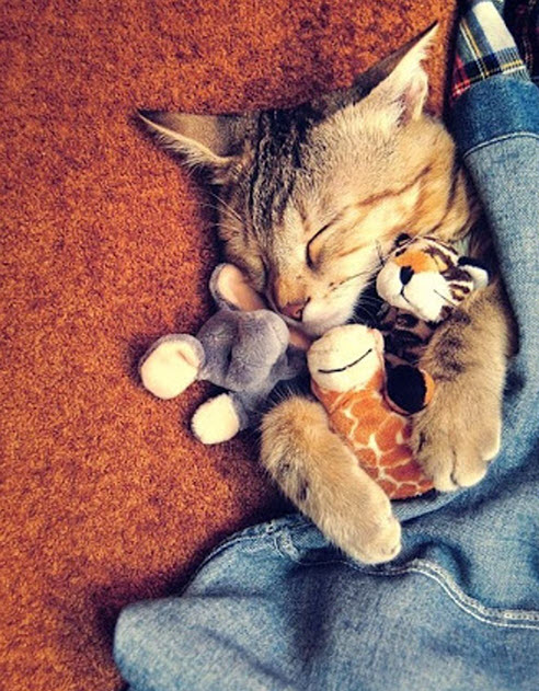 snuggling toys