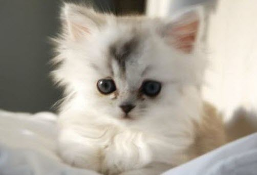 cutest_kitten_ever