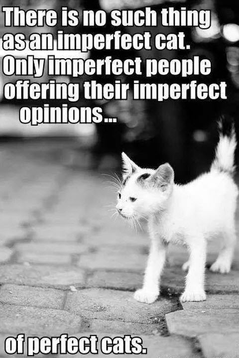 perfect cats